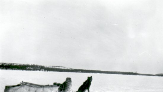 Dog team with caribou in the background
