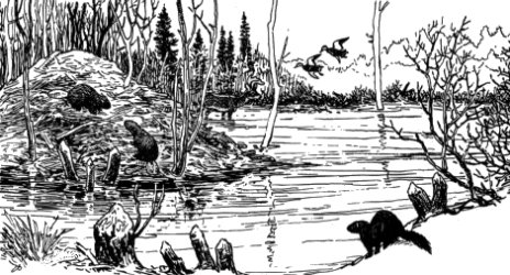 Beaver House and Wildlife