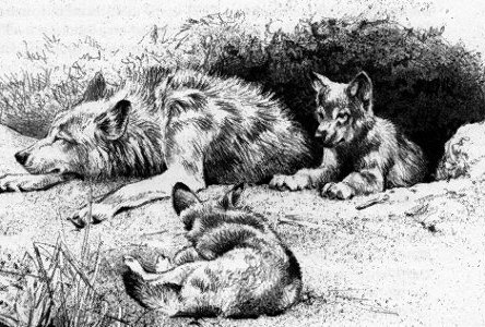 Wolf Den and Wolves