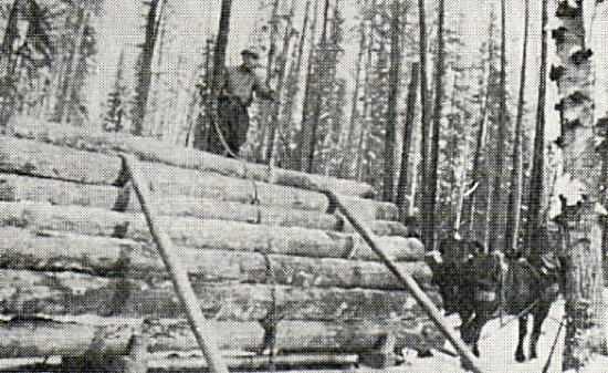 Logging - Ellis and Pinkerton's Mill - East Bay, Stoney.
