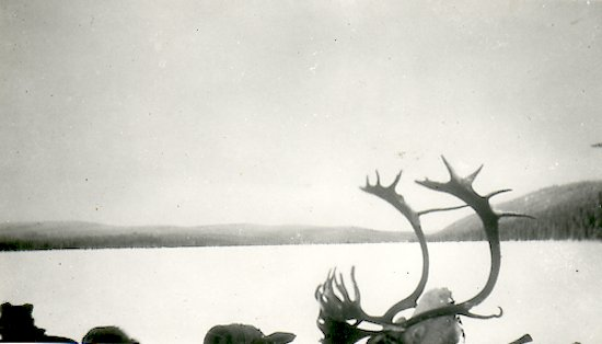 Caribou head and horns in canoe