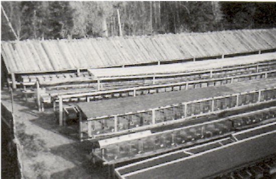 Halvor Ausland's mink ranch on Deep River.