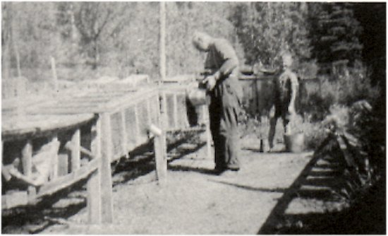 Carl Vickland and Ferdie Edquist watering the mink at Edquist's mink ranch behind Geir's Island.